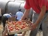 Betriebszweig Erdbeeren 2